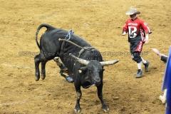 PBR-Bull-Riding-Velocity-Tour-Rupp-Arena-1-25-20-TM-SVA-685
